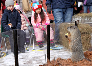 LINCOLN, MA - FEBRUARY 2: Children look on as Ms. G, the Official Groundhog of the Commonwealth, prepares to make her annual prediction on the length of the remaining winter during a Groundhog Day celebration at Mass Audobon's Drumlin Farm Wildlife Sanctuary in Lincoln, MA on Feb. 2, 2018. (Photo by David L. Ryan/The Boston Globe via Getty Images)