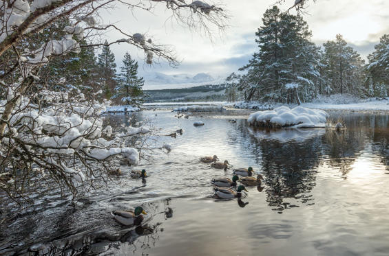 Slide 1 of 35: Loch Morlich at the foot of the Cairngorms in Scotland after the snow