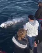 Playful whale greets tourists in an unusual way