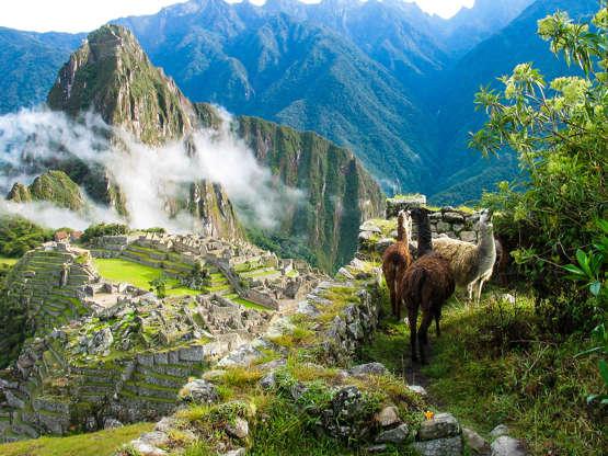 Διαφάνεια 23 από 51: Llamas watch the morning mist rise over the ancient Inca fortress and sloping stone terraces of Machu Picchu with Huana Picchu in background.