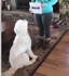 This amazing dog learned how to read