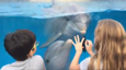 Little girl calls dolphins over with comb