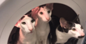 Three cats playing astronauts in the washing machine