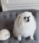 Adorable dog hilariously mimics cute teddy