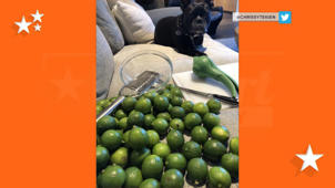 a close up of a fruit: Too many limes and smashed cake: Chrissy Teigen documents all-too-relatable baking fails