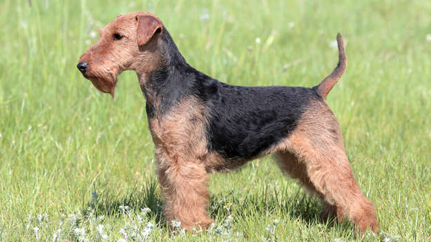 Shortest (and Longest) Living Dog Breeds in the World