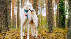a dog standing next to a forest