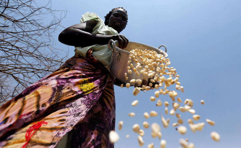 File Photo: A South Sudanese refugee winnows maize grains