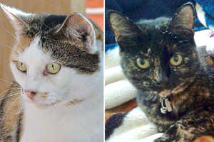 Missy (R) was discovered dead in Coulsdon in 2015, Amber (L) was found dead without her head and tail