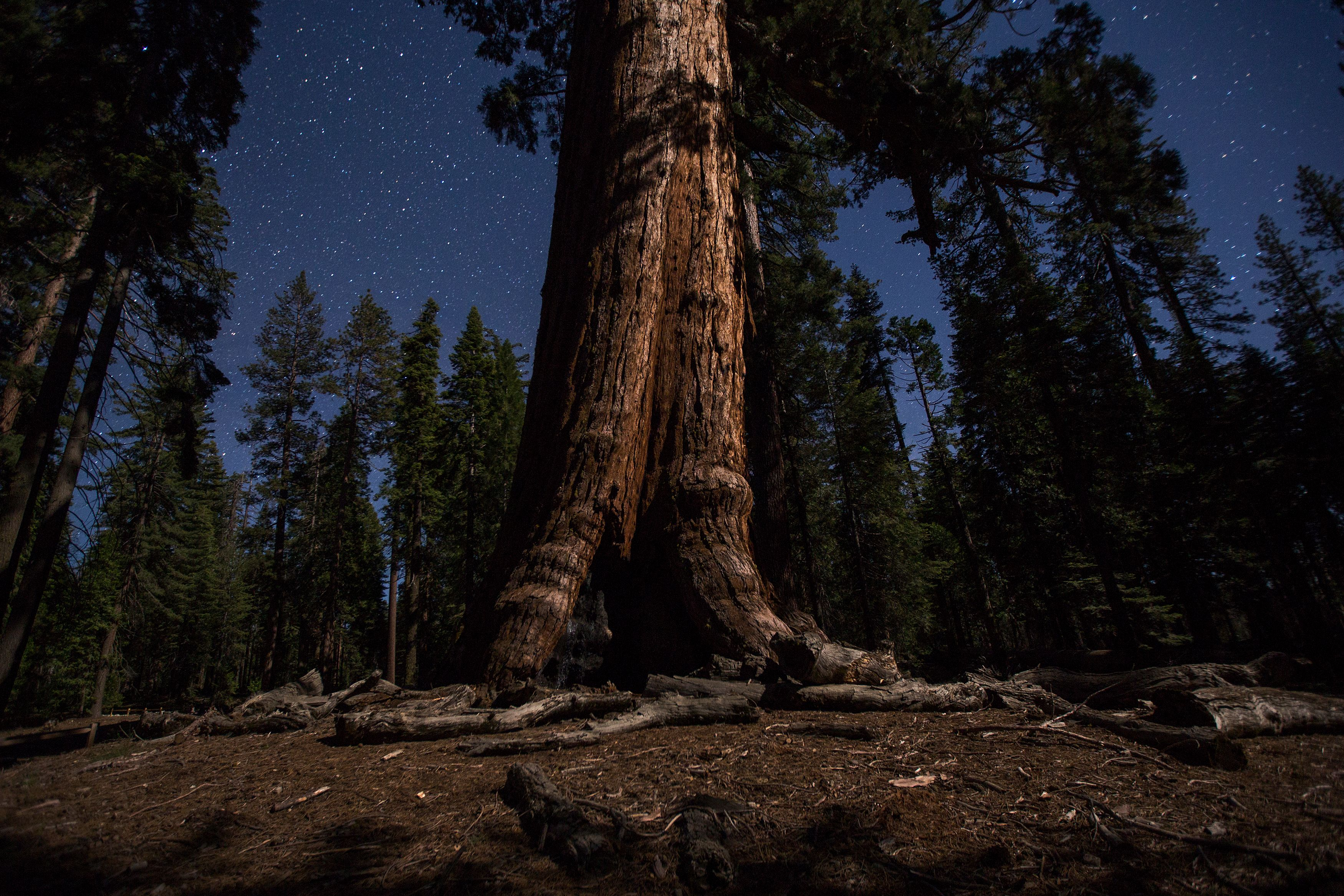Slide 10 of 77: The Grizzly Giant sequoia tree, which is 96 feet in circumference and thousands of years old, is illumined by moonlight under a starry sky at the Mariposa Grove of giant sequoias on June 20, 2018 in Yosemite National Park, California which recently reopened after a three-year renovation project to better protect the trees that can live more than 3,000 years. (Photo by DAVID MCNEW / AFP)        (Photo credit should read DAVID MCNEW/AFP/Getty Images)