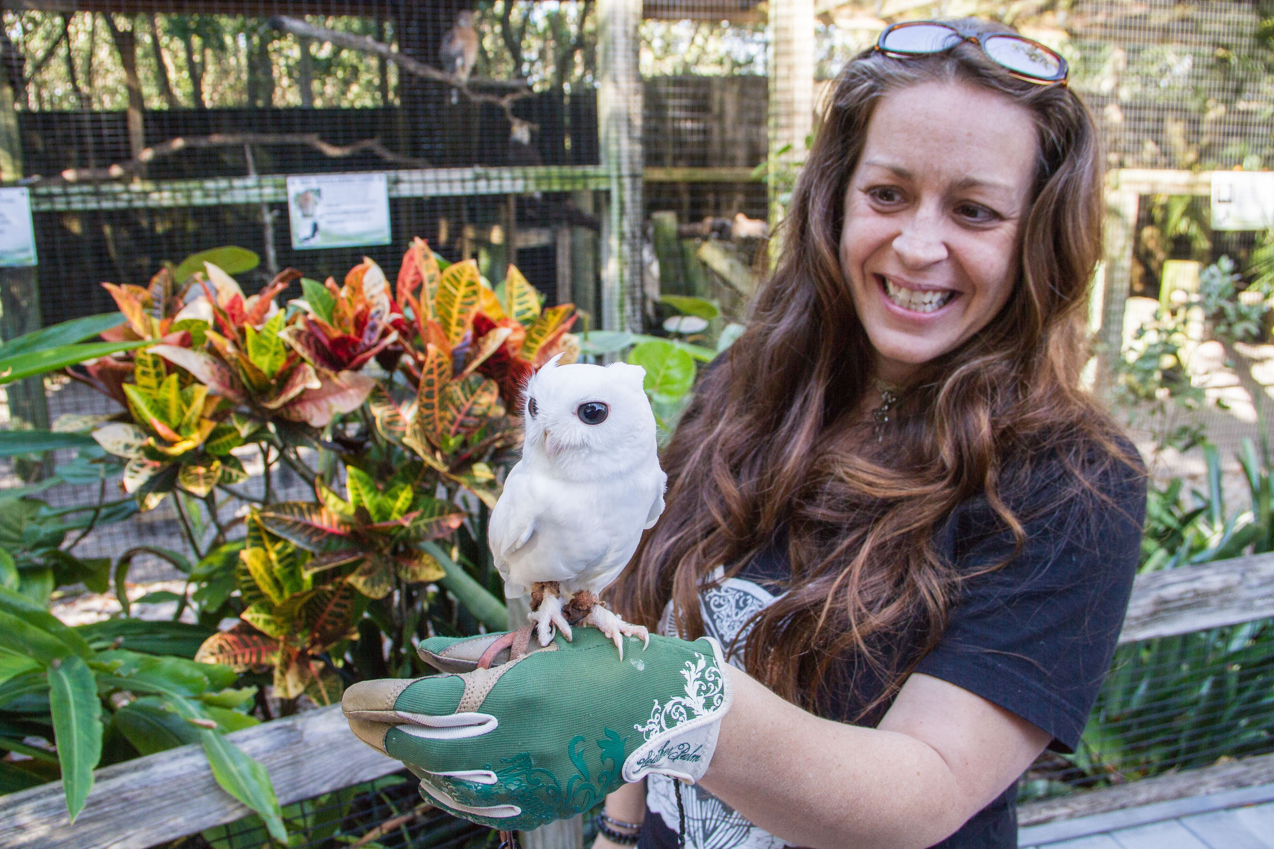 Slide 9 of 23: *** EXCLUSIVE ***  PUNTA GORDA, FL - FEBRUARY 2015: Luna was glove trained by the staff at Peace River Wildlife Centre to educate the visitors, taken in Punta Gorda, Florida, February 2015  Forget the ugly duckling, meet Luna the albino owl. Little Luna lacks the mottled brown feathers and striking yellow eyes of a normal Eastern screech owl. Instead, this special owl is dazzling white in appearance, with pink feet and eyes. Different from the beginning, Luna was found on the ground after hed fallen out of his nest as a young fledgling. Luckily he was brought to Peace River Wildlife Center, a non-profit organization dedicated to the care of orphaned and injured native Florida wildlife.   PHOTOGRAPH BY PRWC / Barcroft Images  London-T:+44 207 033 1031 E:hello@barcroftmedia.com - New York-T:+1 212 796 2458 E:hello@barcroftusa.com - New Delhi-T:+91 11 4053 2429 E:hello@barcroftindia.com www.barcroftimages.com (Photo credit should read PRWC / Barcroft Images / Barcroft Media via Getty Images)