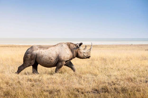 Angry rhino flips car at German safari park