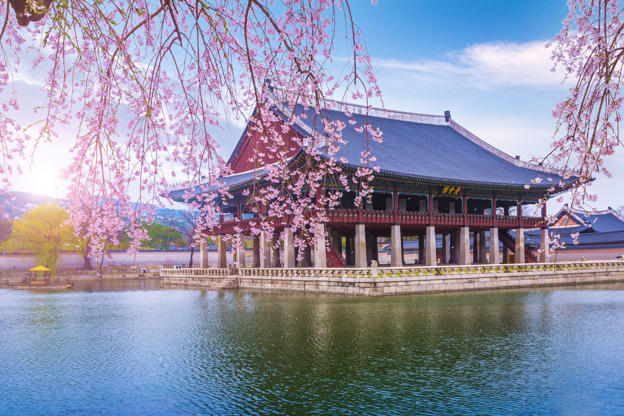 Slide 3 de 51: CAPTION: tourist'n and gyeongbokgung palace in spring, South Korea.