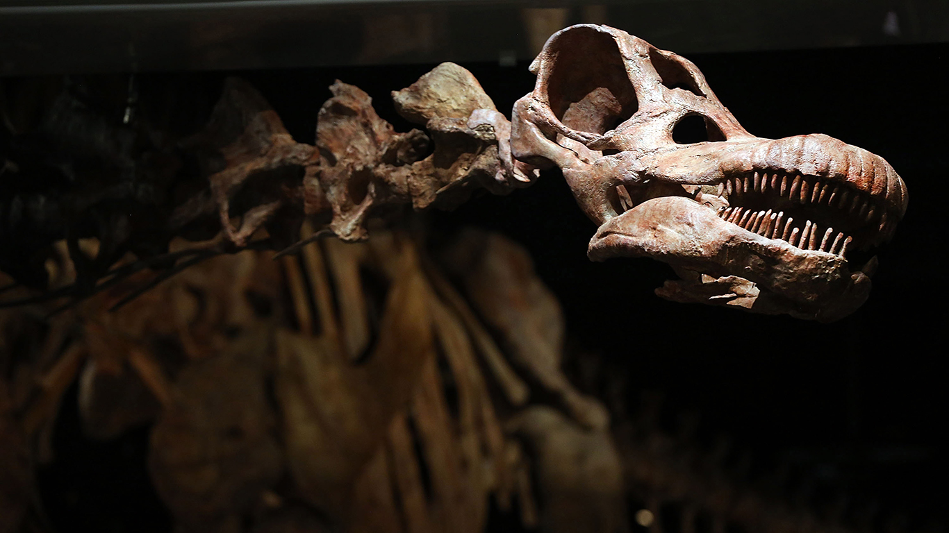 Carbon dating dinosaur fossils museum