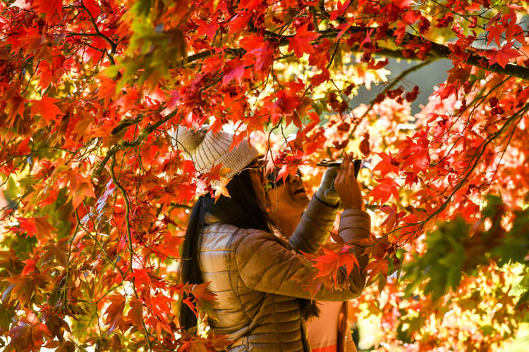 Beautiful Fall Colors Around The World In 2018
