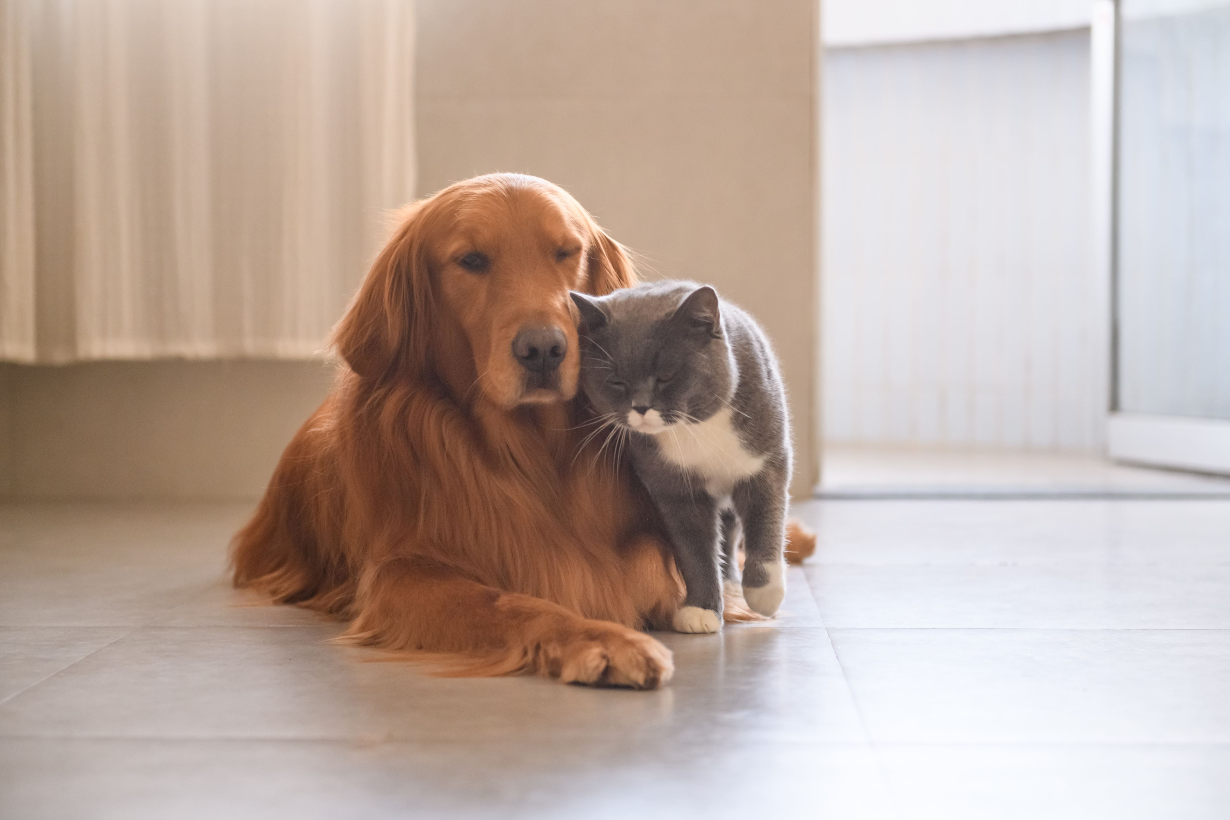 Image of: Therapy What Is An Emotional Support Animal And What Kind Of Animals Are Qualified Ajccom What Is An Emotional Support Animal And What Kind Of Animals Are