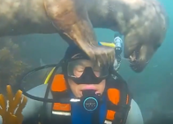Moment a playful seal checks if diver's scuba diving mask fits correctly