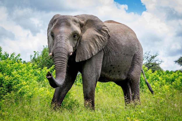4d0ff51a61cfc2 In z'n tweejaarlijks Living Planet Report komt het Wereld Natuur Fonds  (WWF) tot de conclusie dat sinds 1970 maar liefst 60% van de wilde  dierenpopulaties ...
