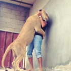 Friendly lioness passionately hugs her caretaker