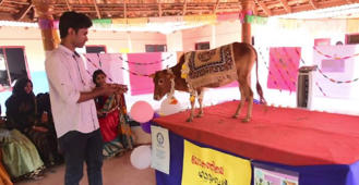 Meet world's shortest cow, measuring only 61.1 cm