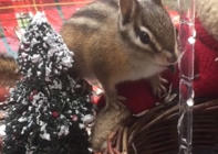 Chipmunk's funny talk with human
