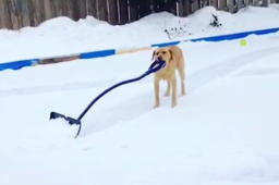 You have to see these snow-loving dogs