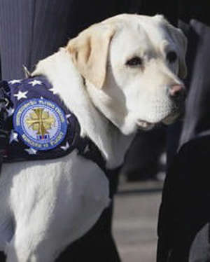 Sully the service dog prepares to embark on a new adventure after Christmas a20bbf97b