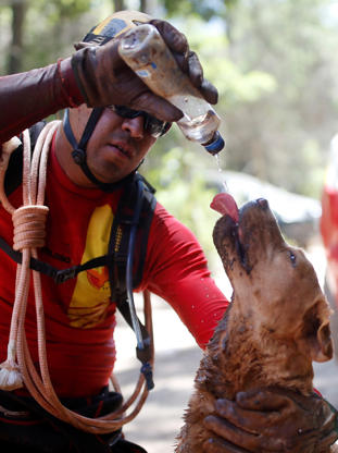 Slide 2 de 95: A member of a rescue team, refreshes his dog with water after a tailings dam owned by Brazilian mining company Vale SA collapsed, in Brumadinho, Brazil January 30, 2019. REUTERS/Adriano Machado