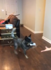 Helpful dog fetches tissue paper when girl sneezes