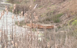 ORANGE alligators are turning heads in South Carolina neighbourhood