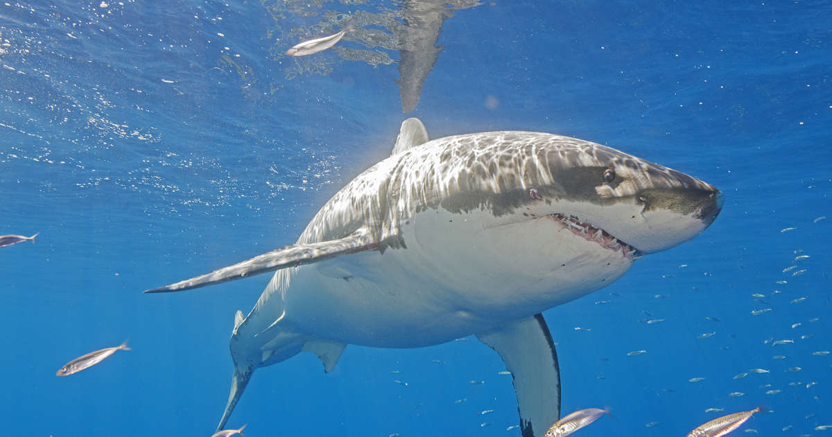 After fatal shark attack, some complain of slow response