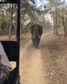 Terrifying moment elephant charges at visitors in safari vehicle