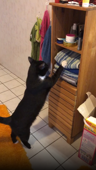 Cheeky cat removes towels from shelves so it can take a seat