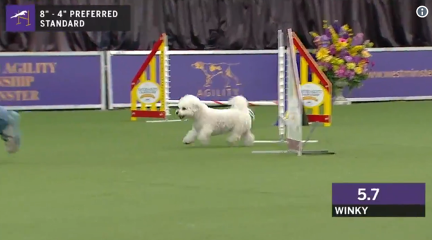 This Adorable Dog Really Took Its Time on the Westminster