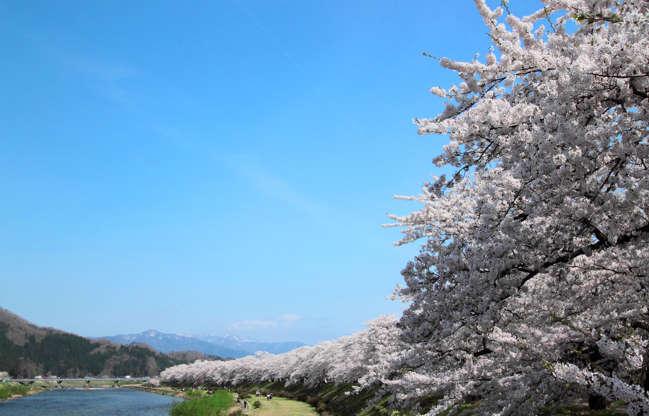 24 枚のスライドの 21 枚目: cherry blossom in Kakunodate, Akita, Japan (1 May 2012)