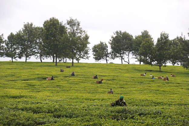 Kenya in spat with Iran over Sh4bn tea exports