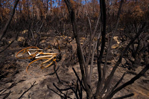 LIAWENEE, AUSTRALIA - FEBRUARY 22: Fire damage is clearly visible from the Great Lake Highway as vehicles drive past on February 22, 2019 in Liawenee, Australia. Around 20 residents were evacuated from the area recently as Tasmania has experienced almost six weeks of bushfires since Christmas, with almost 200,000 hectares of land burnt across the state. (Photo by Heath Holden/Getty Images)
