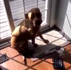 Adorable guilty-looking dog destroys owner's kitchen