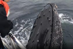 Amazing encounter with friendly humpback whale