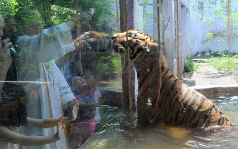 A Roman Catholic priest (L) blesses an Asian tiger with holy water on the eve of  World Animal Day at Malabon Zoo in suburban Manila. The day began in Florence, Italy, in 1931 at a convention of ecologists, whose intention was to highlight the plight of endangered species and October 4 was chosen as the date because it is the feast day of nature lover Francis of Assisi, the patron saint of animals and the environment. / AFP / JAY DIRECTO        (Photo credit should read JAY DIRECTO/AFP/Getty Images)