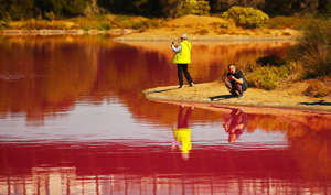 MELBOURNE, AUSTRALIA - MARCH 27: People take photographs of the pink lake at Westgate Park on March 27, 2019 in Melbourne, Australia.  The inland lake turns pink in warmer months thanks to a natural phenomenon. The pink hue happens in response to high salt levels, lots of sunlight and a lack of rainfall. Lake algae, which grows in the salt crust at the bottom of the lake produces a red pigment as part of its photosynthesis process. (Photo by Scott Barbour/Getty Images)