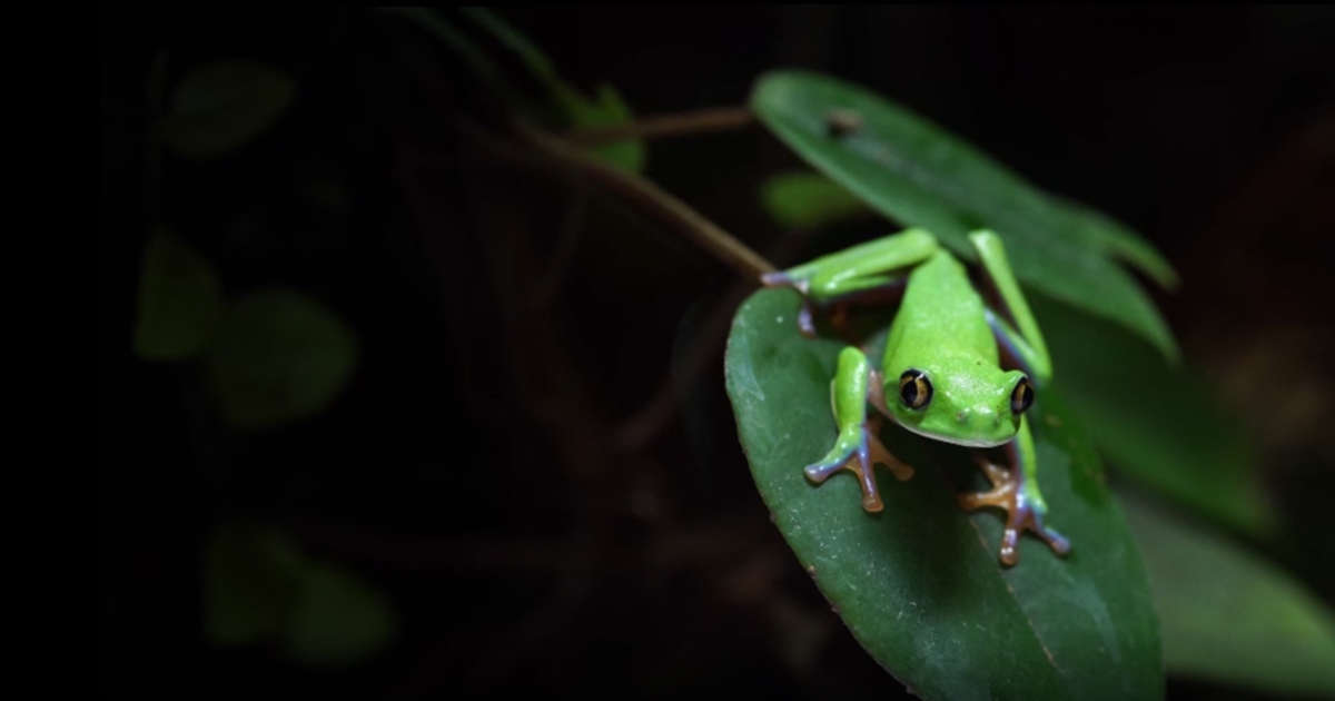 Amphibians face mass extinction as fungus spreads across the world