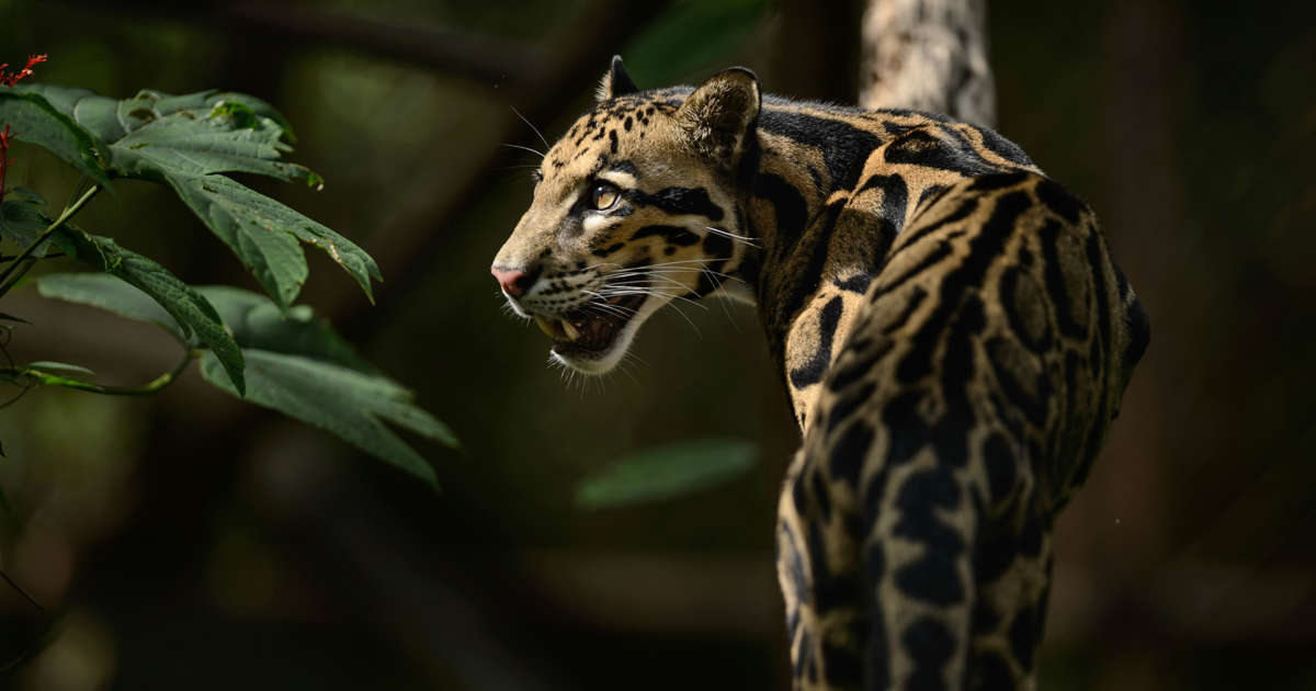 The 6 best places to see leopards in Africa