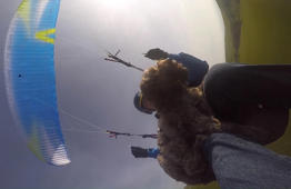 Meet Britain's paragliding dog that takes to the skies with his owners