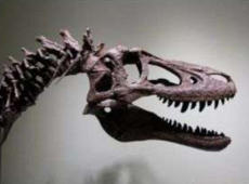 Rare baby T-Rex skeleton listed on eBay for $3M infuriates scientists