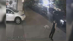 a person standing in front of a car: Video captures car nearly hit woman, dog as it drives on sidewalk