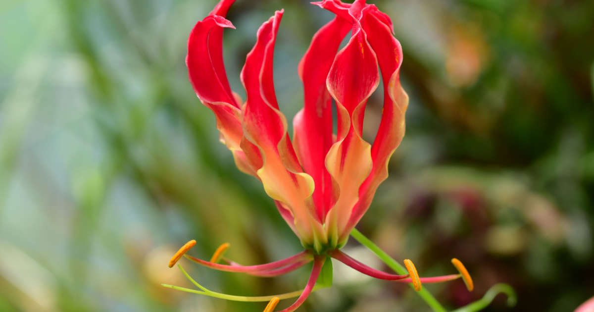 16 Of The Rarest Flowers On Earth