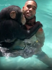 See chimp scroll through Instagram like human