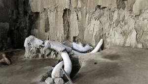 mammoth traps discovered