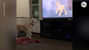 a dog standing in front of a television